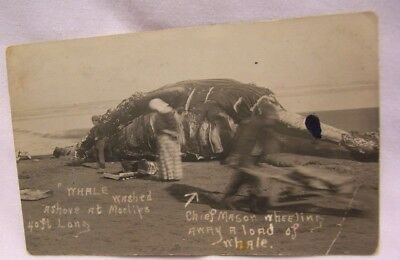 1911 Moclips Washington Whale on Beach being Butchered by Chief Mason RPPC