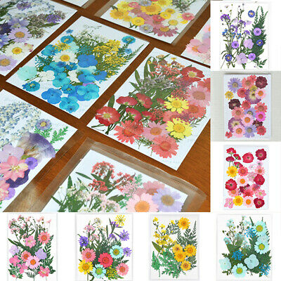 New Pressed Dried Flower Real Violet Sage Art Crafts Scrapbooking Decor Handmade