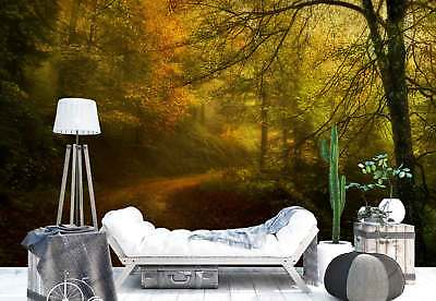 Woods Uphill Road Leaves Cover Photo Wallpaper Wall Mural (1X-1221194)