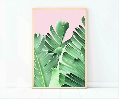 pink background with tropical banana leaf photography print/poster