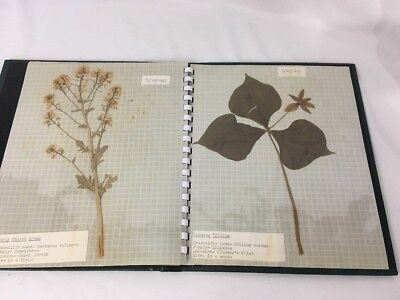 Vintage WILDFLOWER Notebook w/ Dried Flowers & Notes Dated 1967