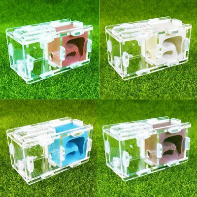 Small Ant Nest Farm Science Experiment Formicarium Insect Nest Colorful New