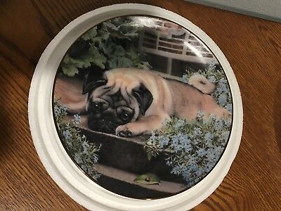 Danbury Mint A Pug's Life Plate by Simon Mendez Limited Edition