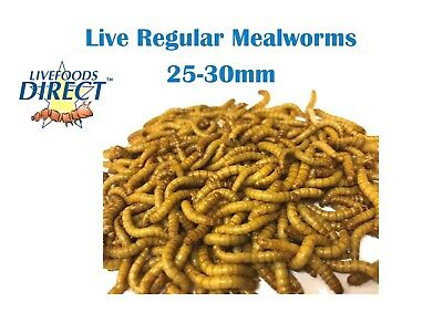 Live Mealworms 1 Tub of 55g Livefoods Direct Reptile Food insects Bird Food