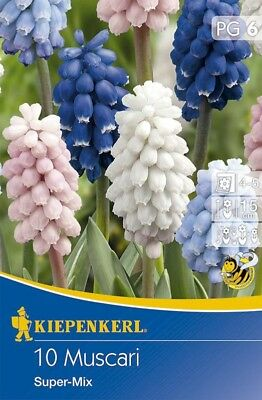 Muscari Super Mix Farbenmischung