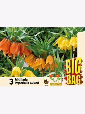 Big Bag Fritillaria imperialis rot, gelb, orange Kaiserkronen-Mix
