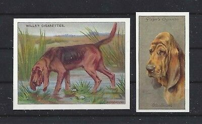 1915 - 1940 UK Reissue Reproduction Dog Art Cigarette Card Set x 2 BLOODHOUND