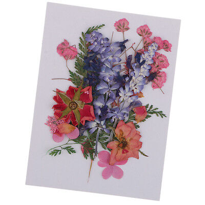Multiple Real Pressed Dried Flowers DIY Arts Crafts Scrapbooking Card Making