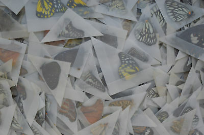 Lot of 100 Mixed Unmounted Butterflies # NEW COMING # Vietnam NORTH