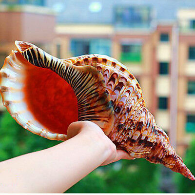 Natural Trumpet Triton Shell Conch Coral Sea Snail Home Ornament Fish Tank Decor
