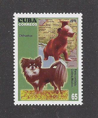 Dog Art Photo Body Portrait Postage Stamp LONG COATED CHIHUAHUA Caribbean MNH