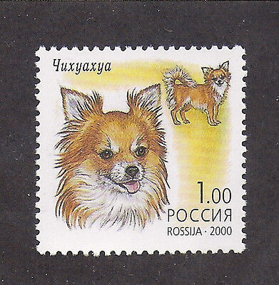 Dog Art Head & Full Body Portrait Postage Stamp LONG COATED CHIHUAHUA Russia MNH