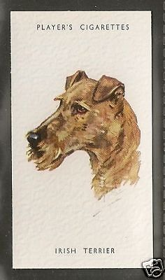1940 UK Peter Biegel Dog Art Head Study Player Cigarette Card IRISH TERRIER