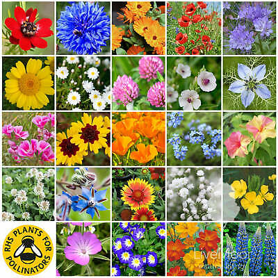 LiveMoor Wild Flower Seeds - Help Save the UK Bees - Various Sizes - No Grasses!
