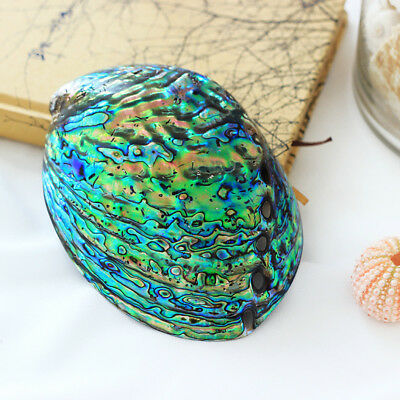Natural Abalone Shell Conch Coral Sea Home Ornament Fish Tank Decor Soap Holder