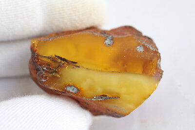 琥珀蜜蜡原石 raw amber stone rock 32.8g honey beeswax 100% natural Baltic 天然波罗的海琥珀蜜蜡
