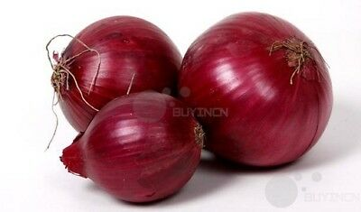 Onion Seed 20 seeds Vegetable Garden yard Patio Plants balcony Bonsai yard