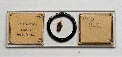 Early  MICROSCOPE SLIDE by J.D. MOLLER, of a Whole  BED BUG