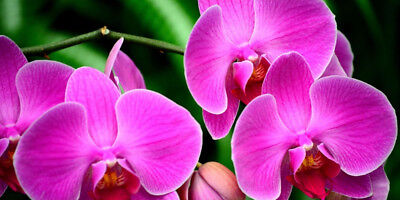 SUBSTRATE for ORCHIDS Growing Media / Highest Quality 1/2 litre,FREE SHIPPING!!!