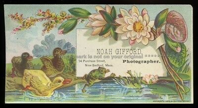 1879 Photographer Tradecard ~ New Bedford MA ~ Frogs ~ Water Lillies ~ Ducks ~