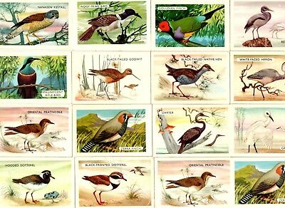 Shell Project Cards X 16 - Bird Series