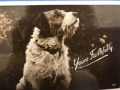 Vintage Dog Postcard  Real  Photograph Dog Puppy Wire Haired Terrier 1930