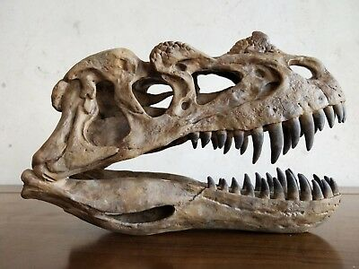 21CM,Dinosaur model / Ceratosaurus Skull Small Model   JBL-002