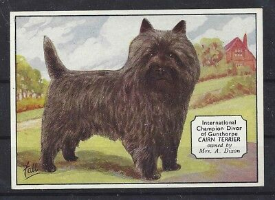 1938 UK Dog Art Photo Hand Colored Ardath Cigarette Card Champion CAIRN TERRIER