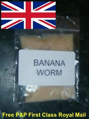 BANANA WORM CULTUREs (75g) AND STARTER KITS