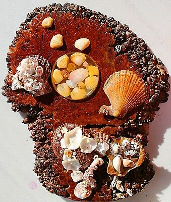 """Beach Decor """"Forest to Sea"""" Jarrah Burl Shells Coral - Natural Features from WA"""