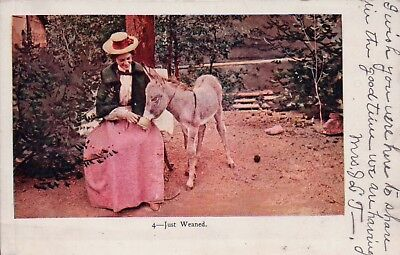 UDB Just Weaned Lady and Donkey Vintage Postcard