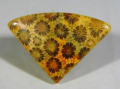 40 Ct Natural Flowers Designer Fossil Coral Agatized Pear Cabochon Gemstone B367