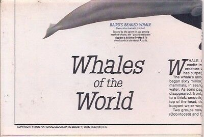 national geographic map-DEC 1976-WHALES OF THE WORLD.