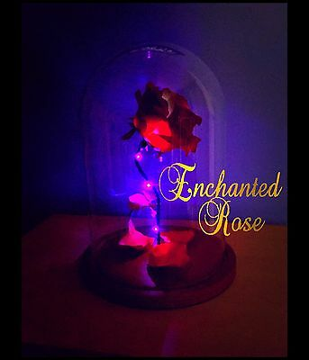 Beauty and The Beast Enchanted Rose.