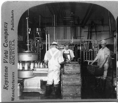 Automatic Machine for Filling & Capping Bottles of Milk,Dairy,Men Working,c1906