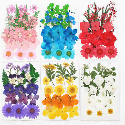 Pressed Flower Mixed Organic Natural Dried Flowers DIY Floral Collection Gift