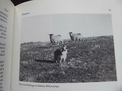 Yorkshire Farm Collie Sheepdog Rounding Up Life Facts Countryside True Farm Book