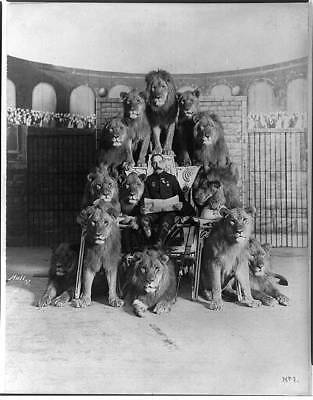 Frank C. Bostock's trained lions,Man reading newspaper,surrounded by lions,1903