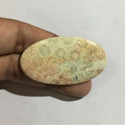 55.6 Cts 100% Natural Pink Fossil Coral Cab AAA+ Quality Loose Gemstone L#946-55