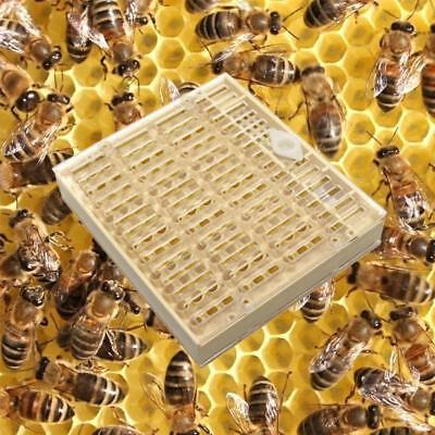 1 Pc Nicot Queen Bee Rearing System For Bee keeping Plastic Nicot Cage Tools new