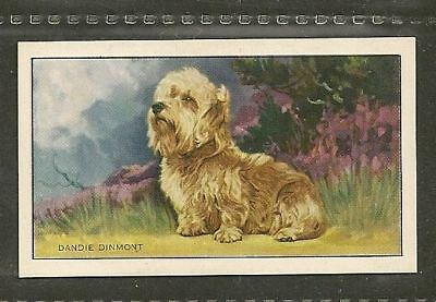 1936 Dog Art Full Body Gallaher Series A Cigarette Card DANDIE DINMONT TERRIER