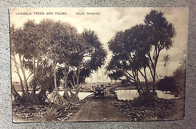 antique ALBERTYPE HAWAIIAN POSTCARD ERNEST MOSES PHOTO LAUHALA TREES HILO