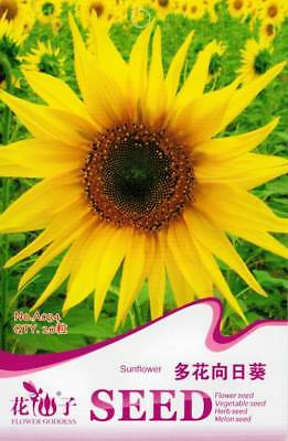 Original Package 20 Sunflower Seeds Helianthus Annus Flower Seeds A034