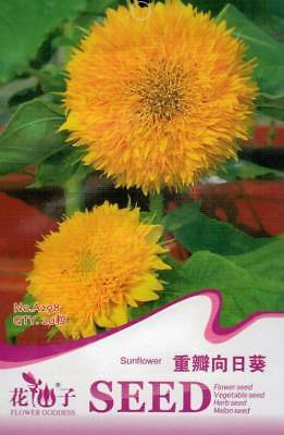 Original Package 20 Sunflower Seed Helianthus Annus A298