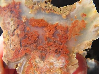 Carey Moss/Plume Agate:Lot of 2 Rough Slabs w/Bright Inclusions,Old Stock Oregon
