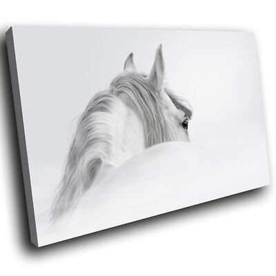 Grey Lion Black White  Funky Animal Canvas Wall Art Large Picture Prints