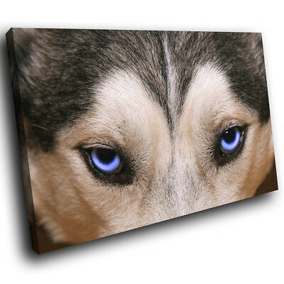 A125 Grey White Wolf Blue Eyes  Funky Animal Canvas Wall Art Large Picture Print