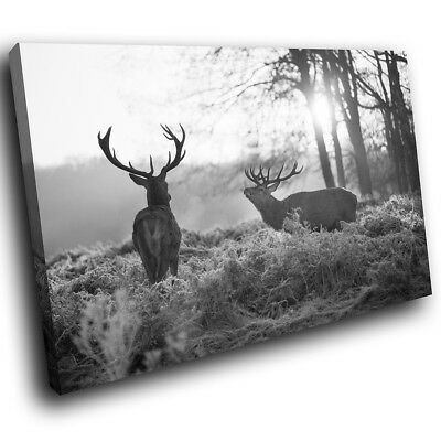 A551 Black White Stags Forest Funky Animal Canvas Wall Art Large Picture Prints
