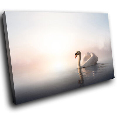 A227 White Pink Swan Lake Mist Funky Animal Canvas Wall Art Large Picture Prints