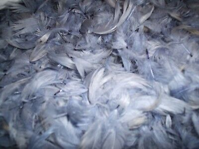 BIODEGRADABLE CONFETTI - Hand dyed feathers - ultimate confetti - Pale Blue